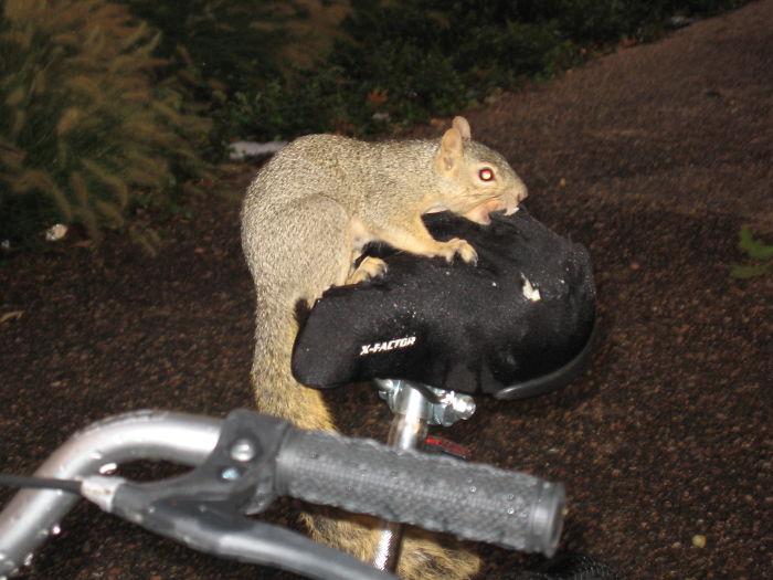 Criminal University Of Texas Squirrel Destroying Property.