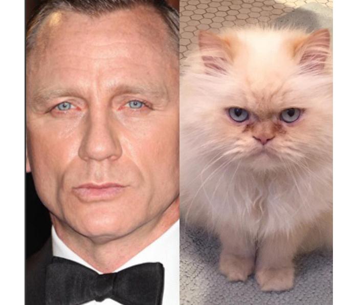 This Cat Looks Like Craig. Daniel Craig. @estebankitty