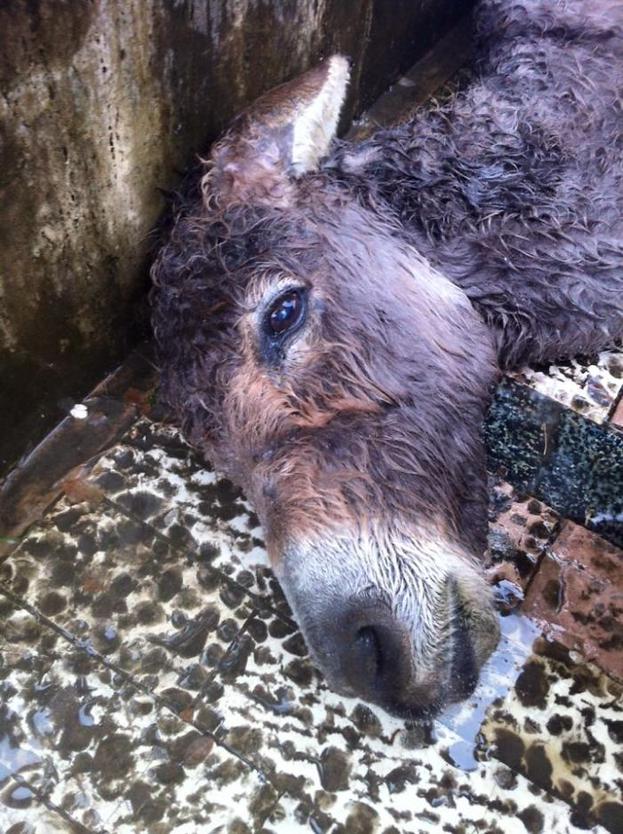 Abandoned And Mistreated Donkey Dies In The Downtown Of Albania Capital, Citizens React Harshly