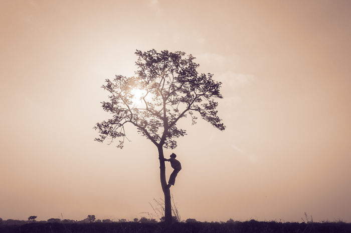 A Lone Tree: My Search For A Path In Life
