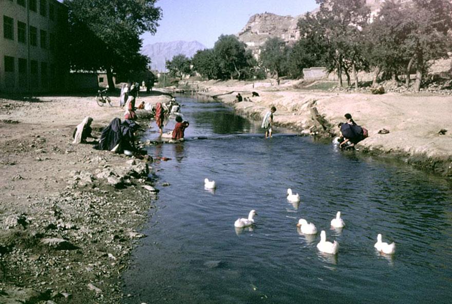 People & Ducks