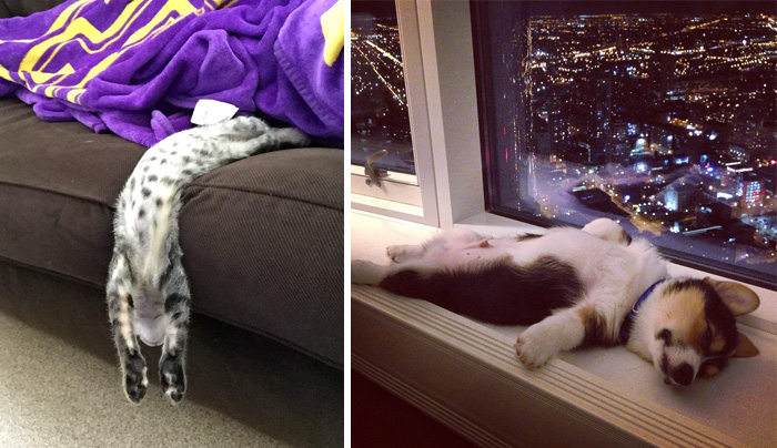 231 Animals That Sleep Wherever They Please