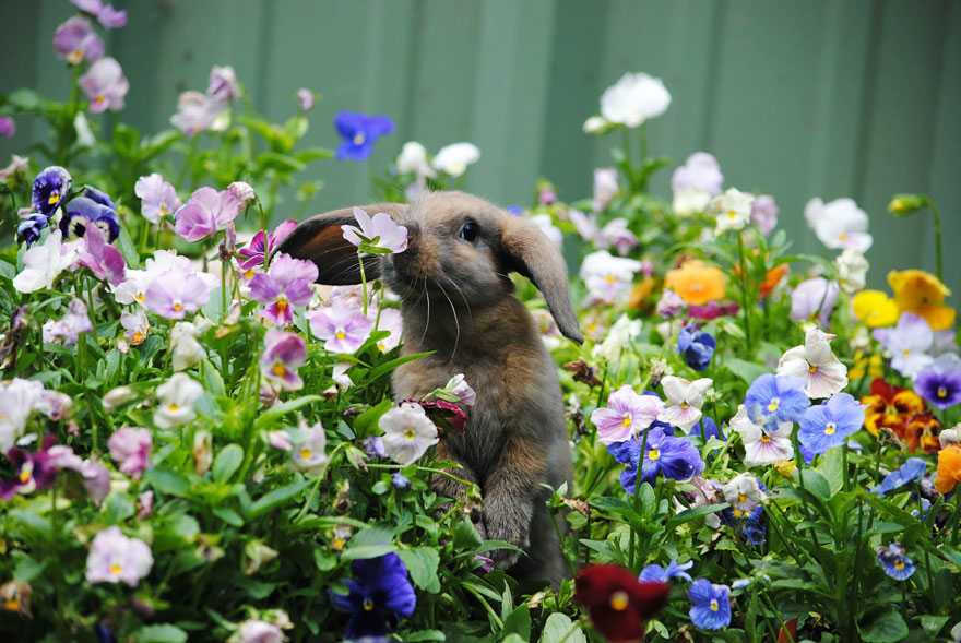 http://static.boredpanda.com/blog/wp-content/uploads/2016/01/animals-smelling-flowers-27__880.jpg