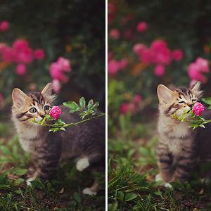 Kitten Smelling Flowers