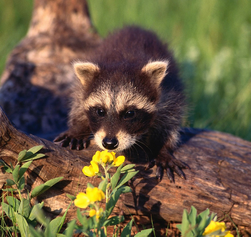 Bored Panda: Animals Sniffing Flowers Is The Cutest Thing Ever (15