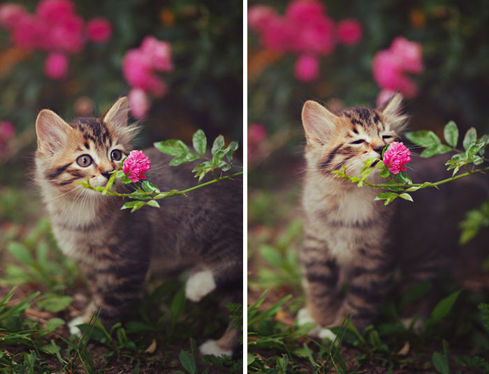 Animals Sniffing Flowers Is The Cutest Thing Ever (15+ Pics)