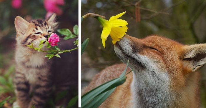 Resultado de imagem para flowers and animals