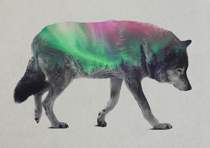 Double Exposure Portraits Of Animals In The Aurora Borealis