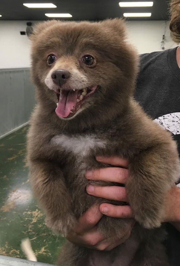 Somebody Brought This Bear Into Doggie Day Care