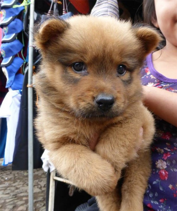 Isn't This The Cutest Darn Puppy/Bear You've Ever Seen?