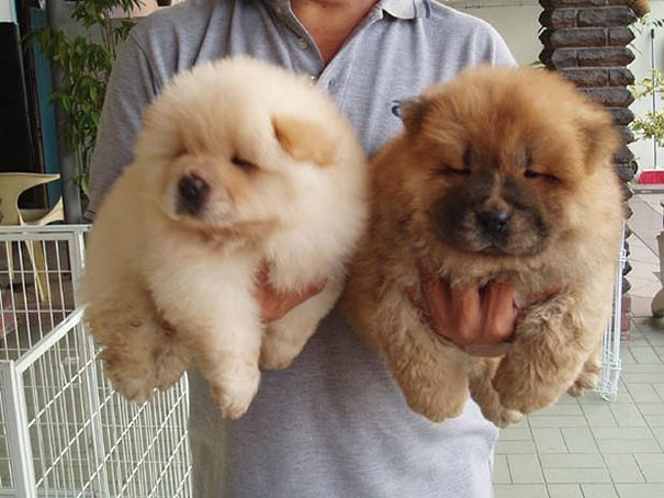 I Will Chow Chow You To Sleep