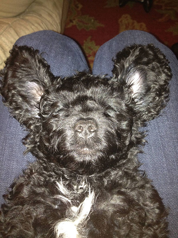 Puppy Or Baby Bear? You Decide
