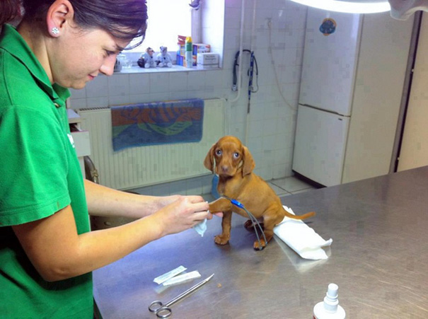 Moment Of Bravery At The Vet