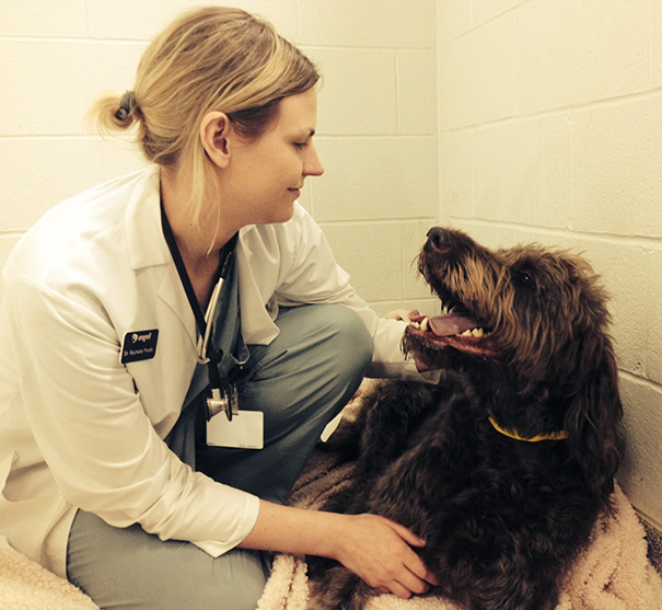 Dog Went Into Critical Care Yesterday. His Vet Sent Me This Picture. He Is Going To Be Ok