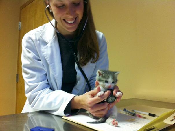 Kitten's First Visit To The Vet