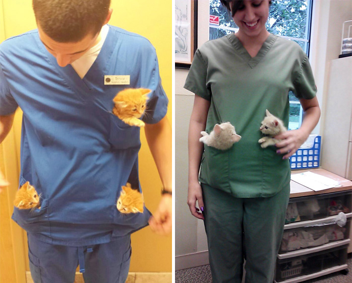 15+ Benefits Of Working At An Animal Hospital