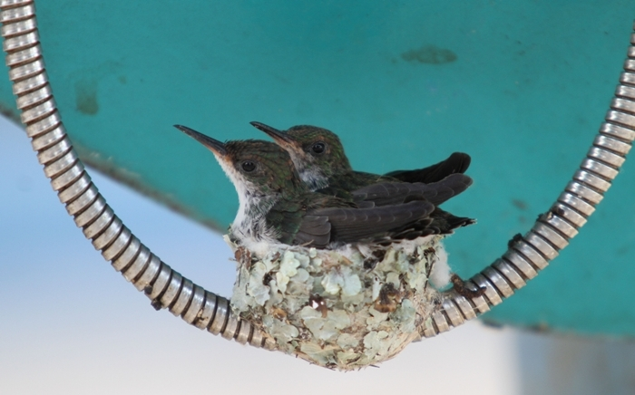 Bird Nest On A Public Telephone Cable