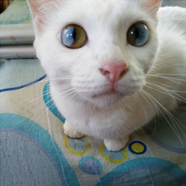 cat-eyes-different-colors-heterochromia9