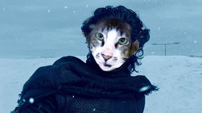 cat-look-alike-adam-driver-7
