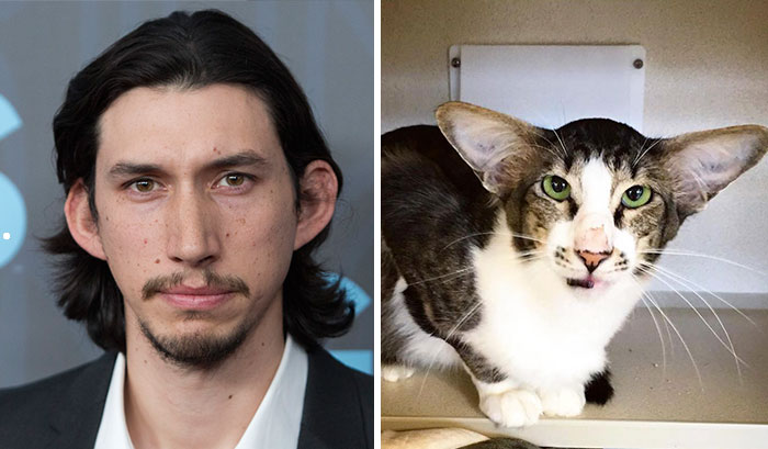 Shelter Cat That Looks Like Adam Driver From Star Wars Finally Adopted