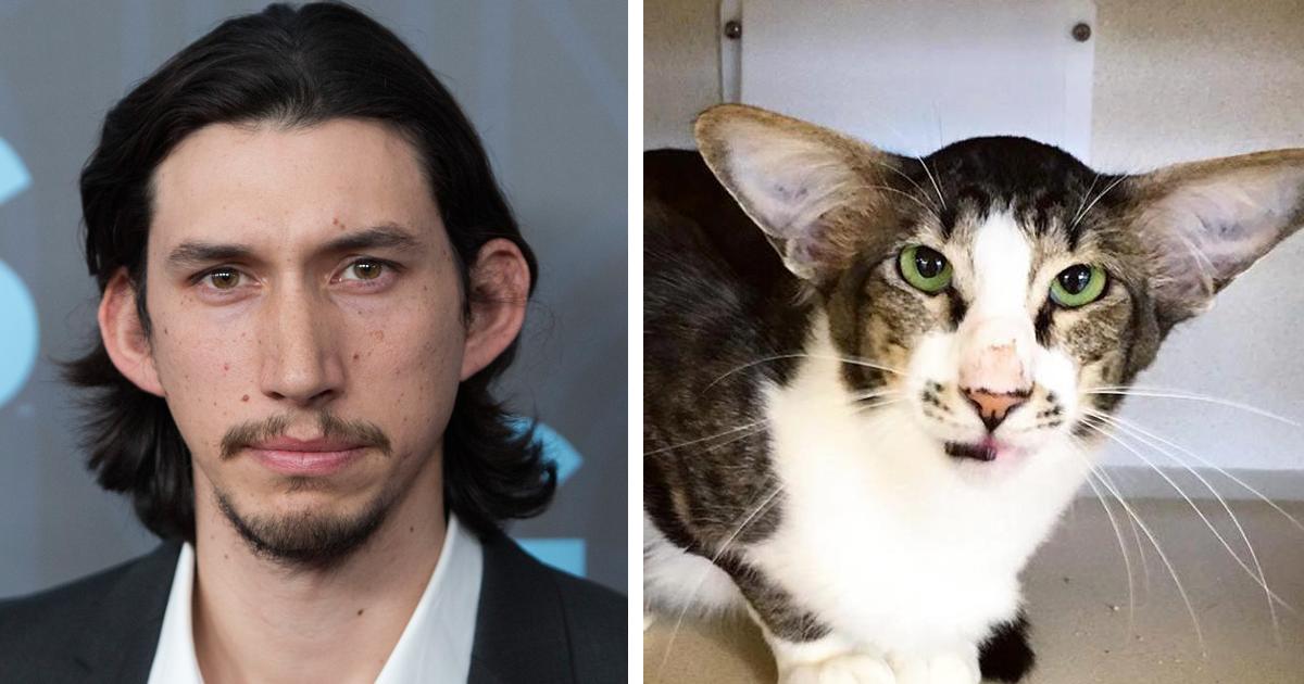 Man Born With Cat Ears