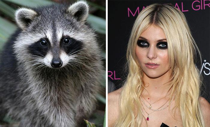 Racoon Looks Like Taylor Momsen