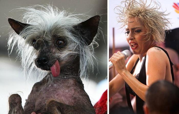 This Dog Looks Like Lady Gaga