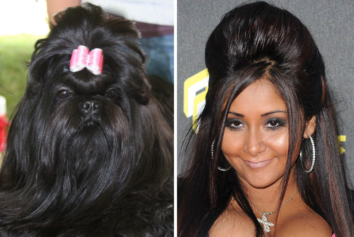 This Dog Looks Like Nicole Polizzi