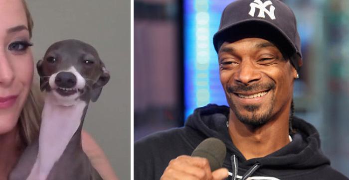 This Dog Looks Like Snoop Dogg