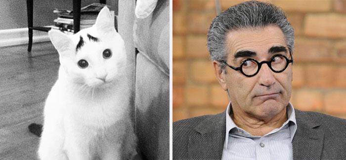 Sam The Cat Looks Like Eugene Levy