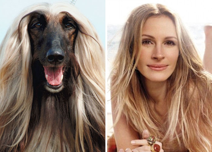 A Dog Looks Like Julia Roberts
