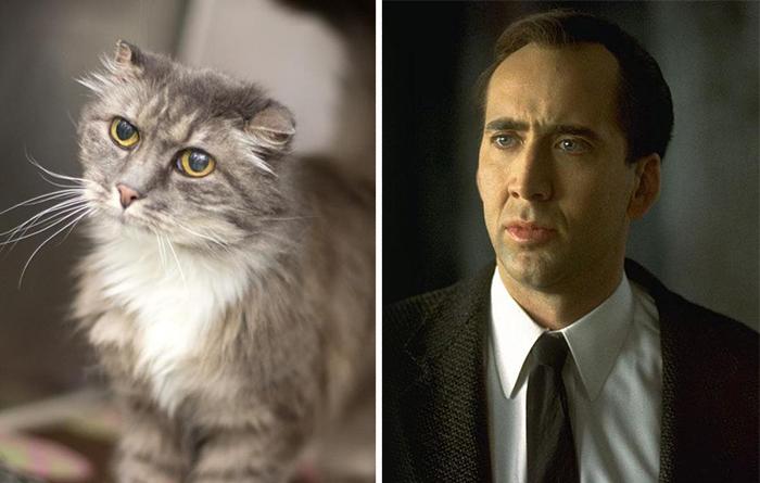 Cat Looks Like Nicolas Cage