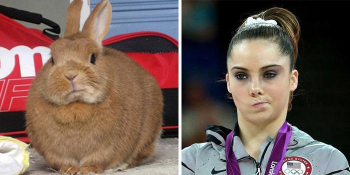 This Bunny Looks Like Mckayla Maroney