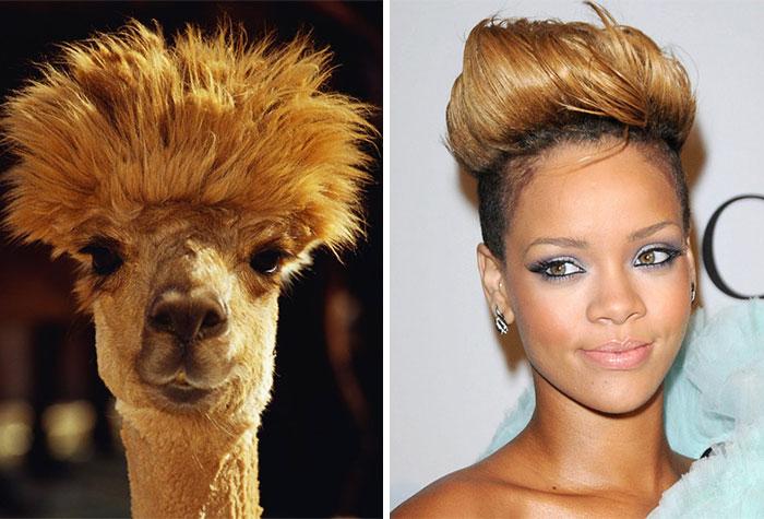 Alpaca Looks Like Rihanna