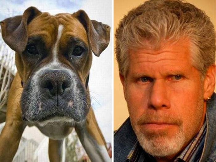 Dog Looks Like Ron Perlman