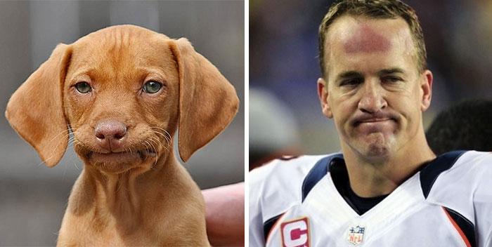 Sad Dog Looks Like Peyton Manning
