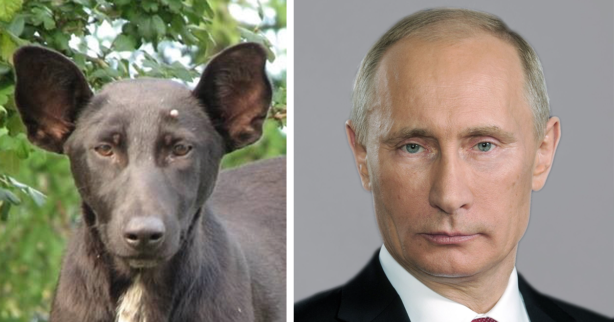 20+ Animals That Totally Look Like Celebrities