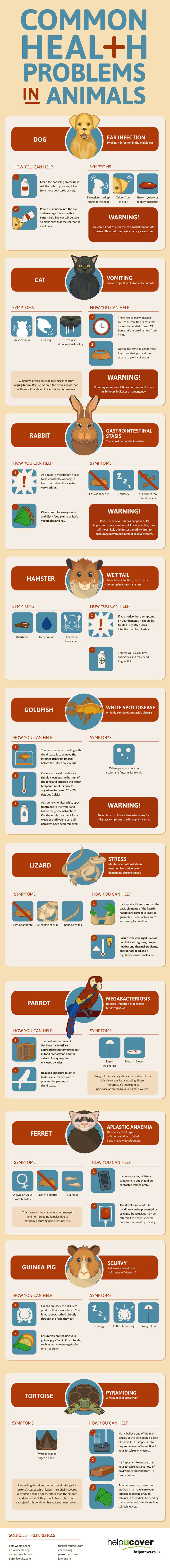 Common Health Problems In Animals