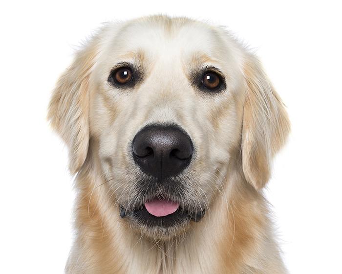 smiling dog white background - photo #31