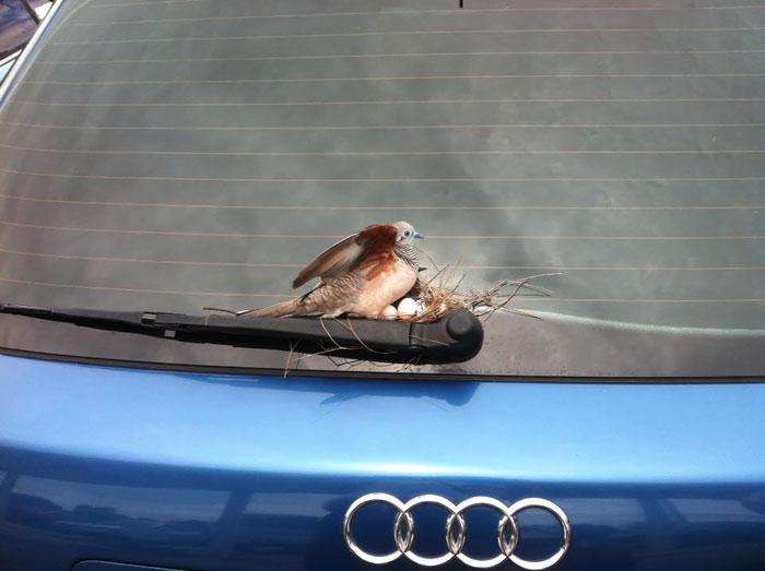 Un amigo mío dejó el coche en un aparcamiento por 6 días y regresó a este