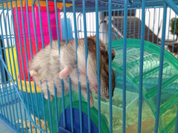 Bruce, My Hamster, Is Weird. Here's He Sleeping