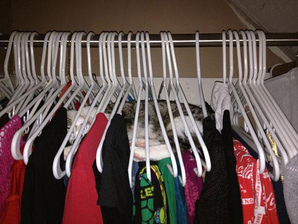 Cat Sleeping In Hangers
