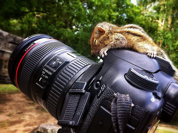 This Rescued Baby Squirrel Was Able To Rest On A Camera