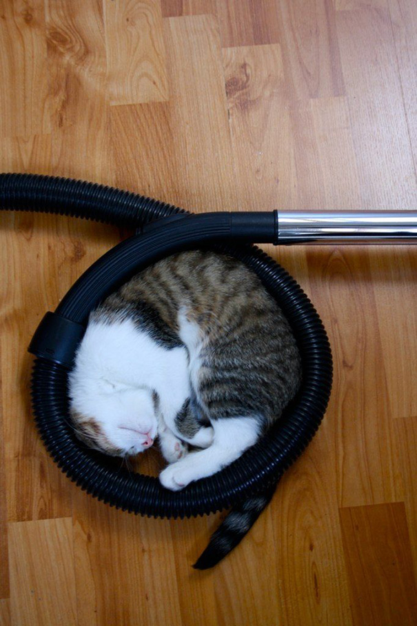 How Cats Help You Vacuum