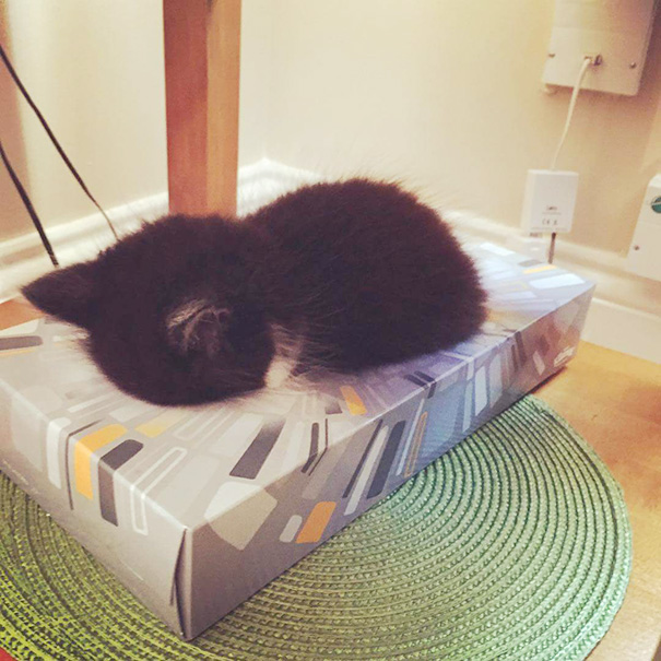 Omar Asleep In A Tissue Box
