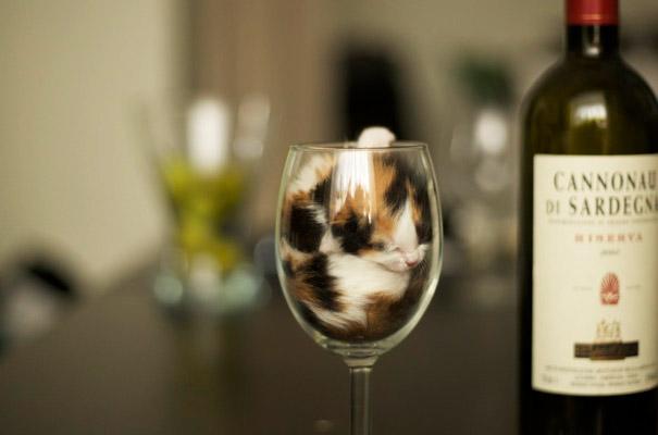 Cat Sleeping In A Glass
