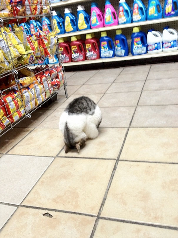 Sleeping In The Grocery Store