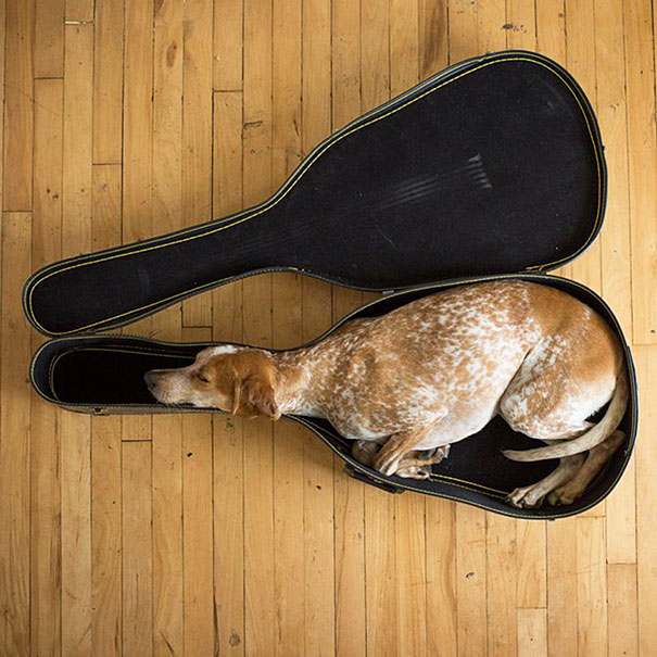 25+ Animals That Sleep Wherever They Please | Bored Panda