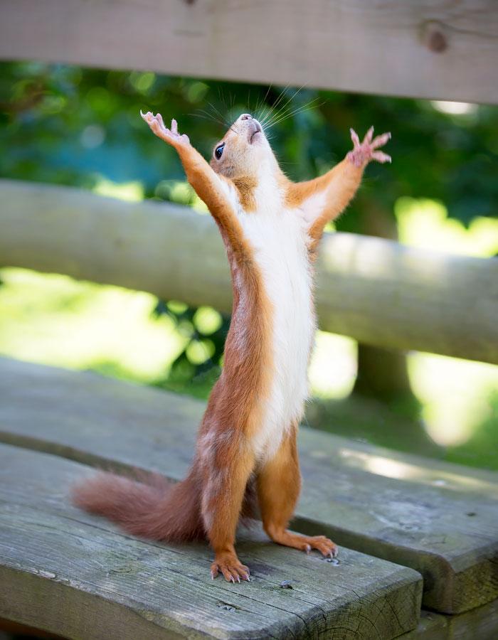 20+ Adorable Pics To Celebrate Squirrel Appreciation Day ... Hallelujah