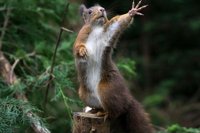50 Adorable Pics To Celebrate Squirrel Appreciation Day Bored Panda